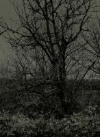 Withered... by wolfcreek50