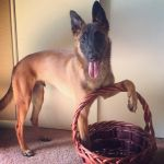Dis Mah Basket by huntinlabs
