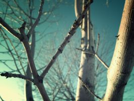 Blue Branches by Selladorra