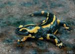 Fire salamander by Sael4