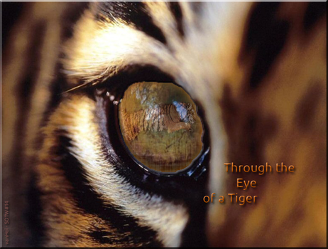 Through the Eye of a Tiger by vanHoi91