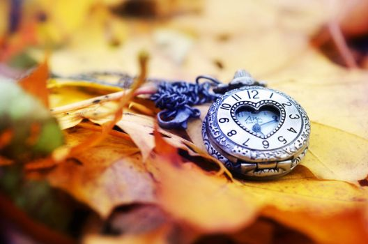Autumn Still life by Lodchen-Photography