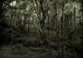 Tree Line by WillJH