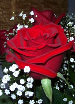 Red Roses 1 by Poopyhead613