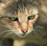 Portrait of a cat by gb-photos
