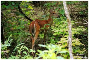 A Deer In The Woods Near My House by TheMan268