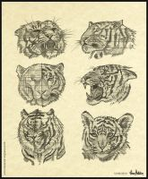 Tiger (Feline) - Head Anatomy Doodles. by AaronMetallion