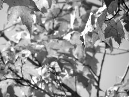In Black and White . . . by JohnstonColleen