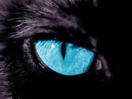Panther's eye by Daxydus