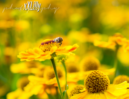Bee by xXLilly