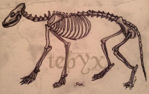Fox Skeleton by Tebyx