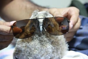 Fluffy Owl with sunglasses by MBdrawings