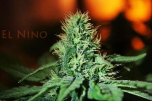 El Nino by 420Imaging