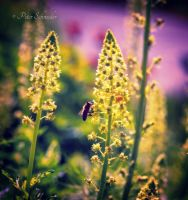 Meadows. by Phototubby