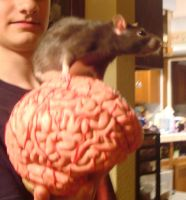 Pinky and the Brain by The-Bryce-Is-Right