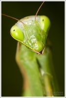 Praying Mantis 2 II by Deformity