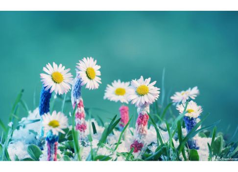 Dear Spring... by Limaria