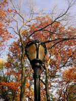 A Lampost? Lame. by Fimrah