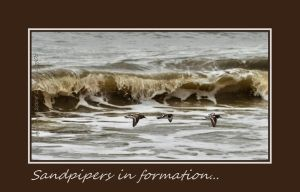 Sandpipers in formation... by LadyAliceofOz