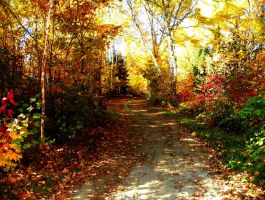 Autumn Path by artistic-touches