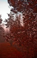 Blood Red by netherl
