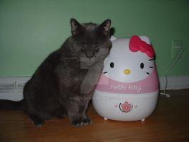 Hello Kitty by Nizy