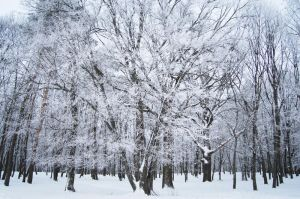 stock: winter forest 7(credit and show the result) by amka-stock