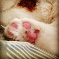 Pink Pads by DarlingChristie