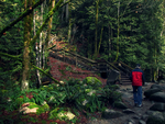 Lynn Canyon by MoonchildLuiza