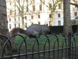 Animals 089 squirrel by Dreamcatcher-stock