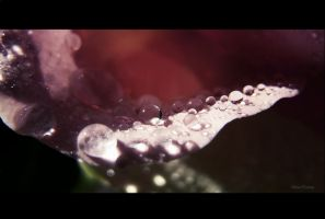 Drops by BeatsDeclivity