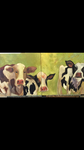 Whimsical cows by ltwilson0009