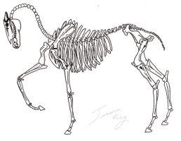 Skeletal Horse - STOCK by kingy9467