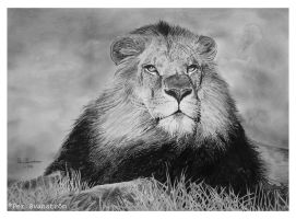 King of the jungle by Per-Svanstrom