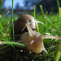 racin' to the camera by illuminie