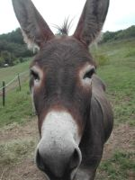 Animals - Donkey 2 by Stock-gallery