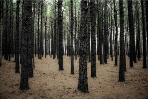 Congo Pines II HDR by joelht74