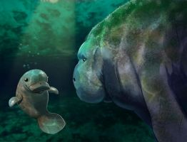 Baby Manatee by PeteYong