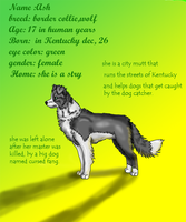Ash the Kentucky dog ref by timmy-gost