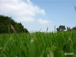 Green by dcoolit