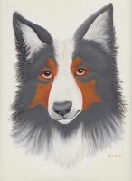 Border collie by whispering-She-Wolf