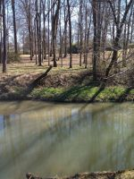 Sunny Creek in March by creecreehoneybees