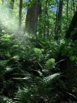 ferns and forest-4015 by VisionsSeen