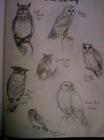 Sketchbook--Owlery II by LongLiveQueequeg