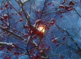 snow covered cherries by richair