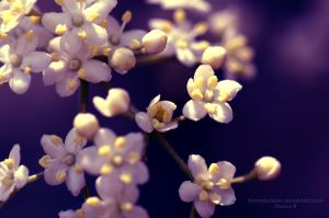 Flowers by Himmelsfalter