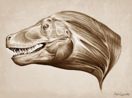 T-Rex head and neck muscle study by SBWomack