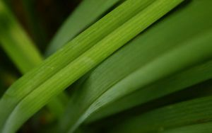 green nature by fluentwater