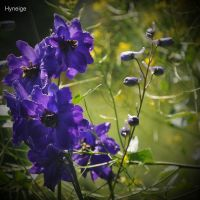 Courbure du bleu by hyneige