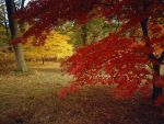 Fall leaves by puddlz